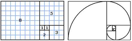 Fibonacci spiraal is een ruimtelijke uitbeelding van de rij van fibonacci
